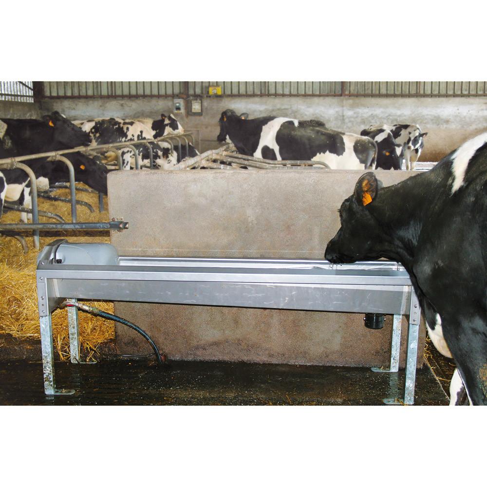 Abreuvoir pour vaches laitières GV230