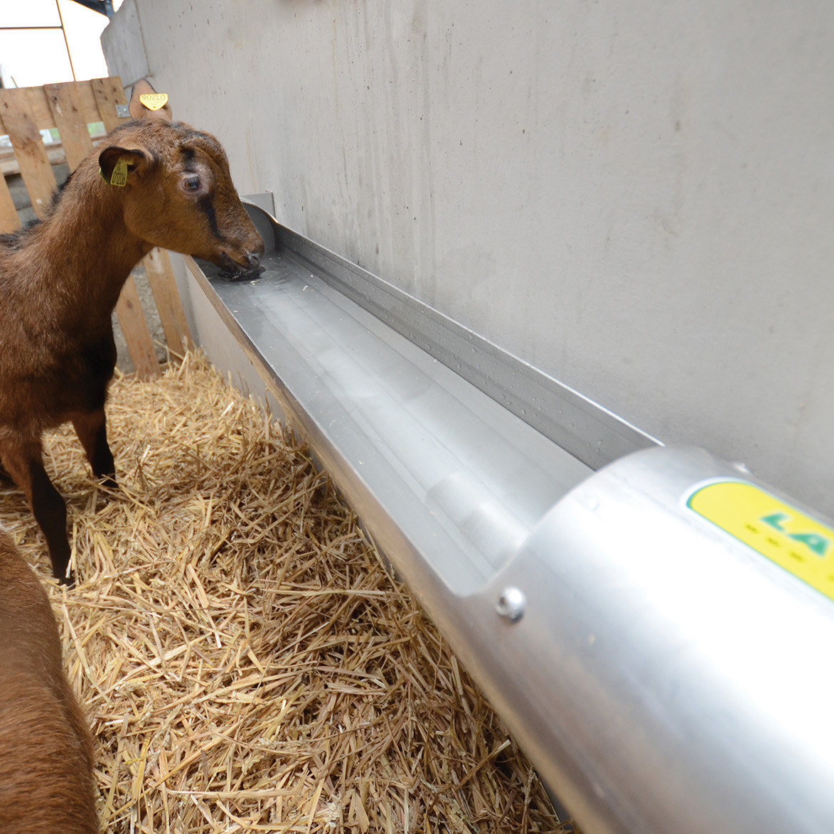 OVITUBE 120 Stainless steel trough for sheep and goats