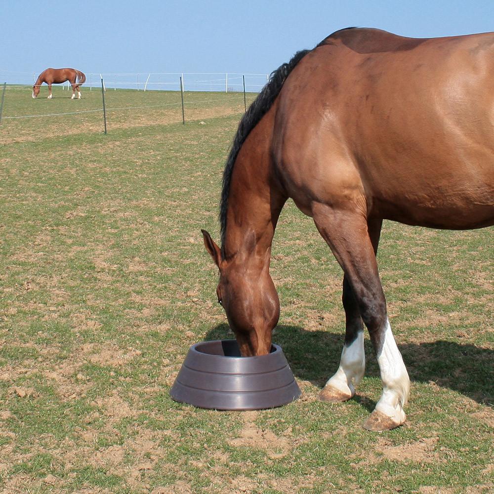 Mangeoire pour chevaux au pré