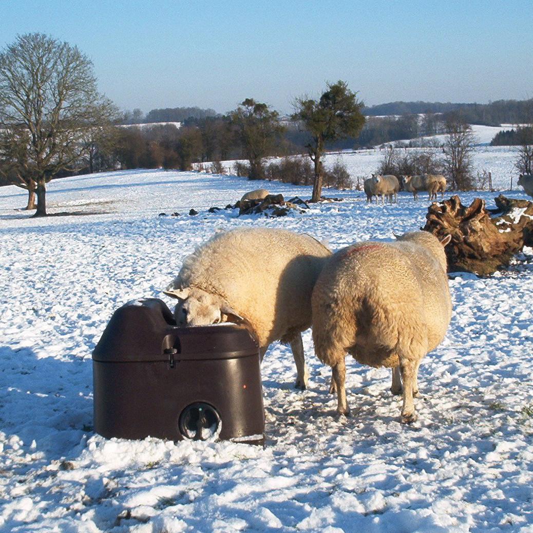 Abreuvoir antigel isotherme THERMOLAC pour moutons